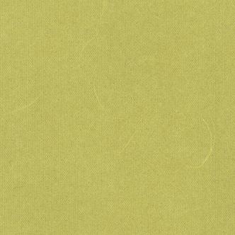 鶸萌葱(ひわもえぎ)雲竜